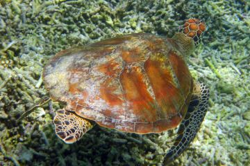Turtle Lady Elliot Is