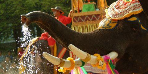 songkran-elephant-tat-1024x683