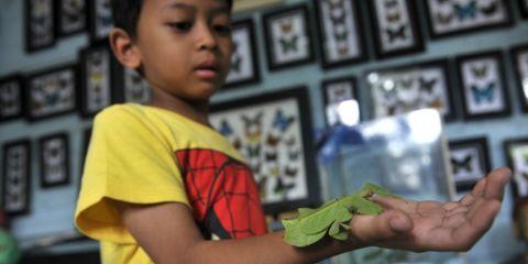Museum-Serangga-Indonesia-31-1024x704