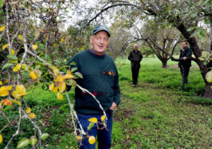 Committee Member Richard Hawkey at Werribee Park Heritage Orchard