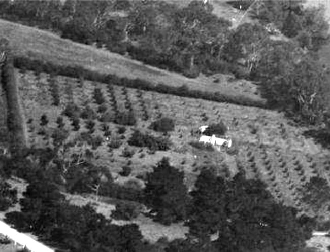 Werribee Park Mansion Orchard 1938