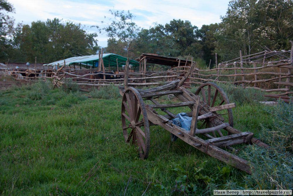 Ферма в Кахетии у реки Алазань