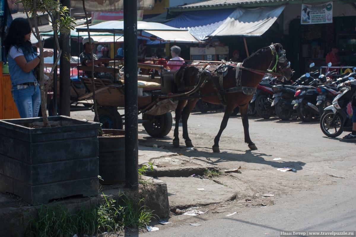 Улица с лошадиными повозками