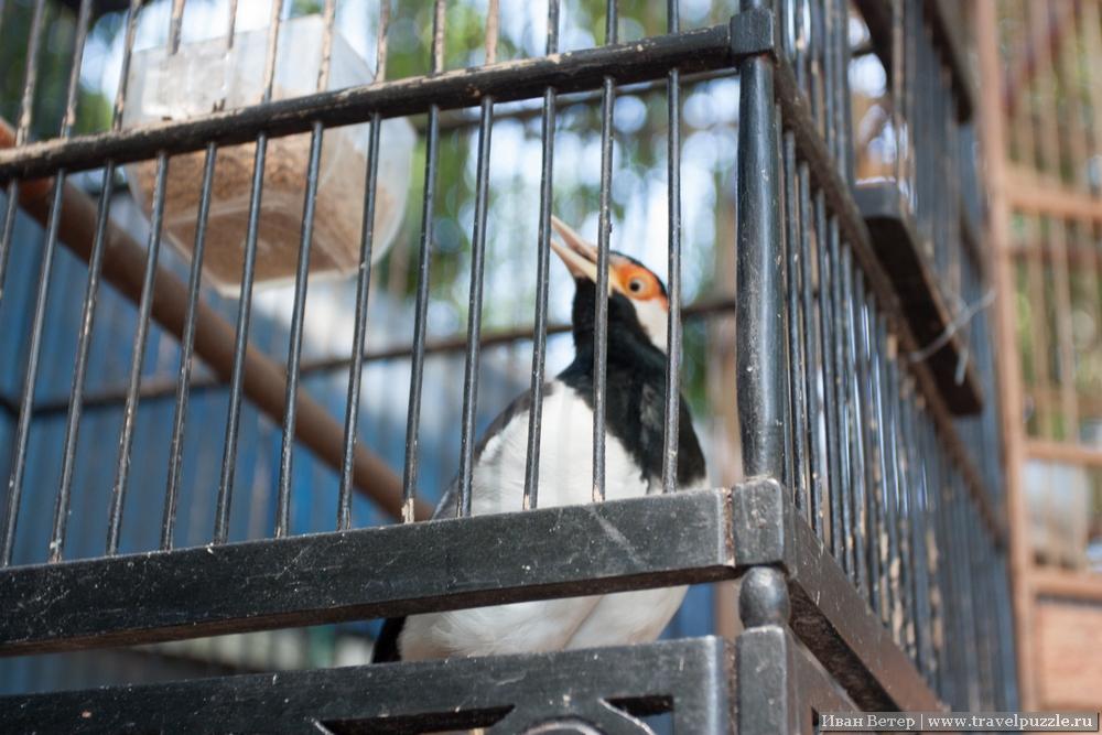 """Игра """"сфотографируй мечущуюся в клетке птицу""""."""