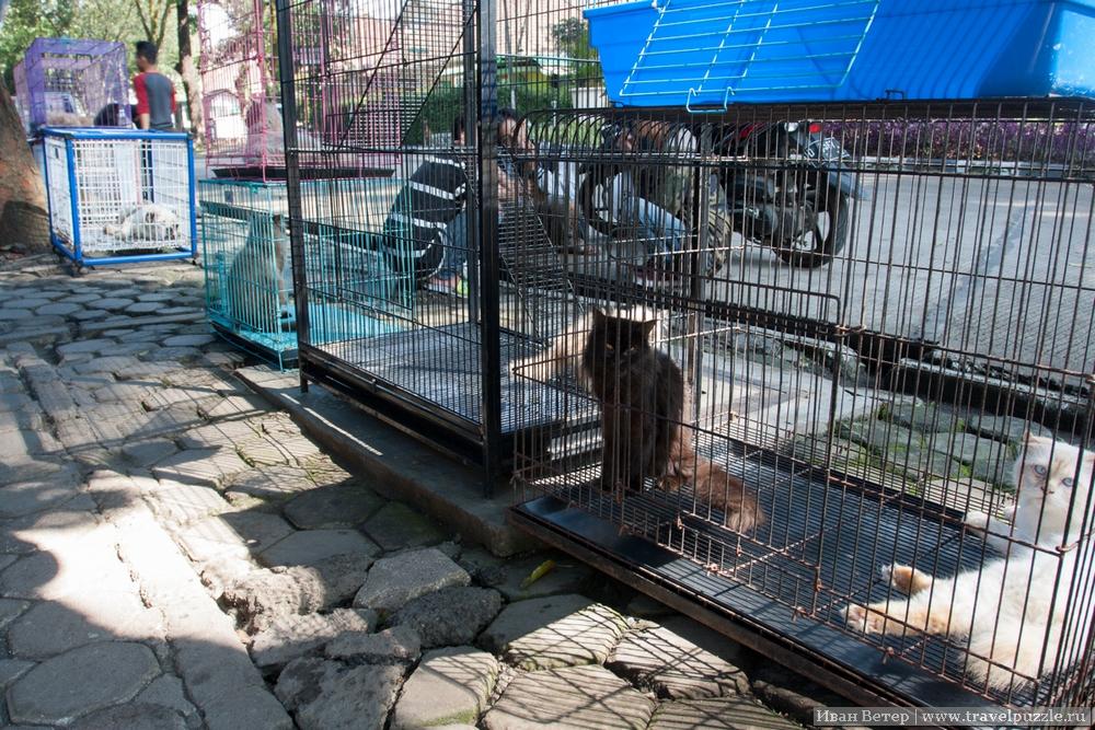 Птичий рынок с котами