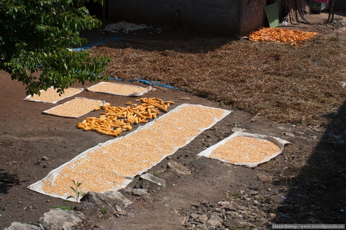 Сушка урожая в деревне на Яве