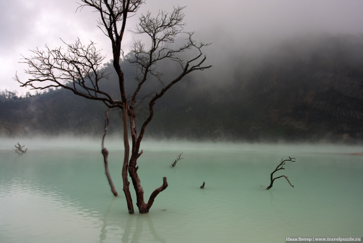 Дерево в озере на Kawah putih