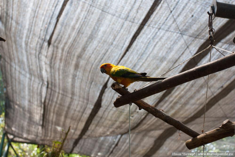 Зоопарки мира - попугай в Индонезии