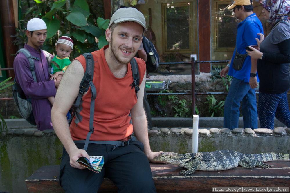 Варан в зоопарке Джогджи