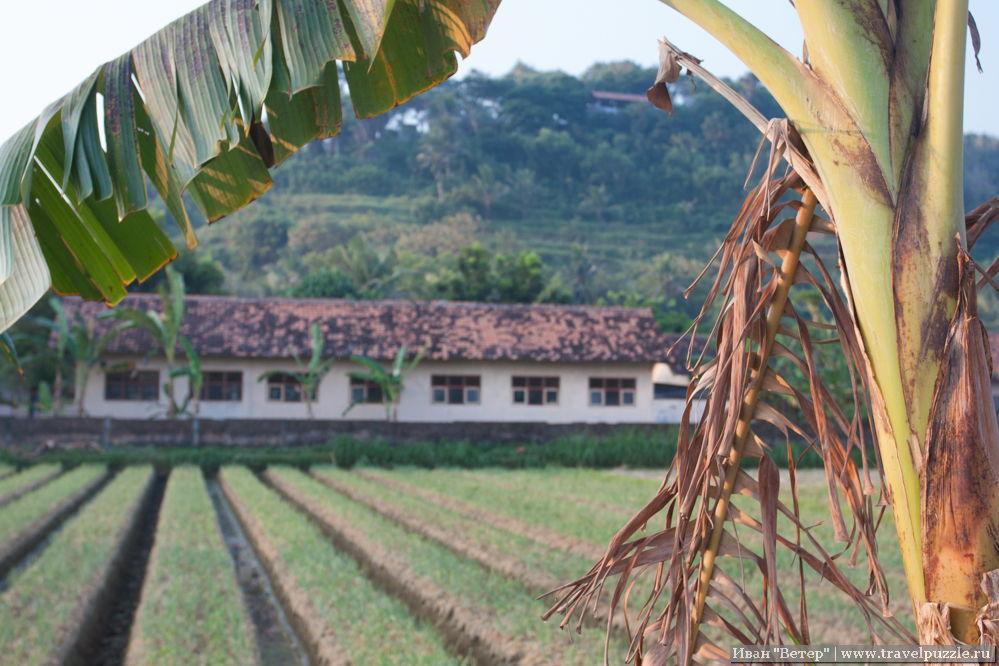 Сельские пейзажи Явы