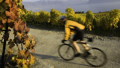 Die 5 besten Fahrrad-Gadgets für den Herbst