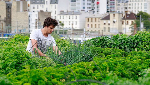 Kann sich eine Stadt mit Lebensmitteln versorgen?