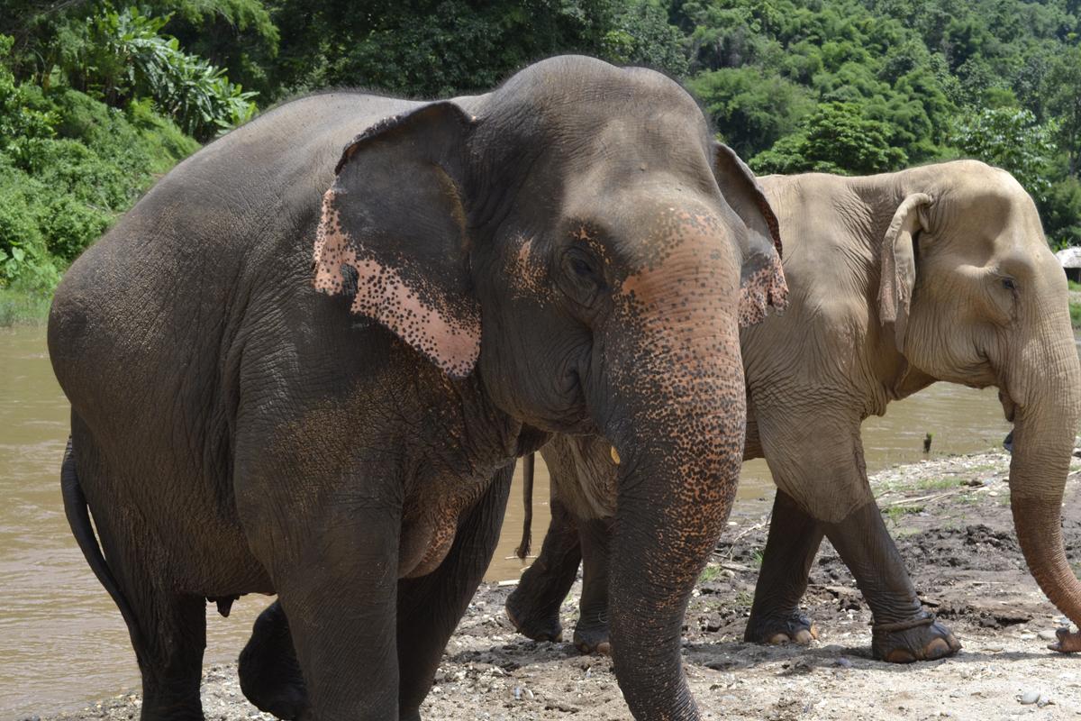 Elephant Nature Park, Chiang Mai, Tailandia