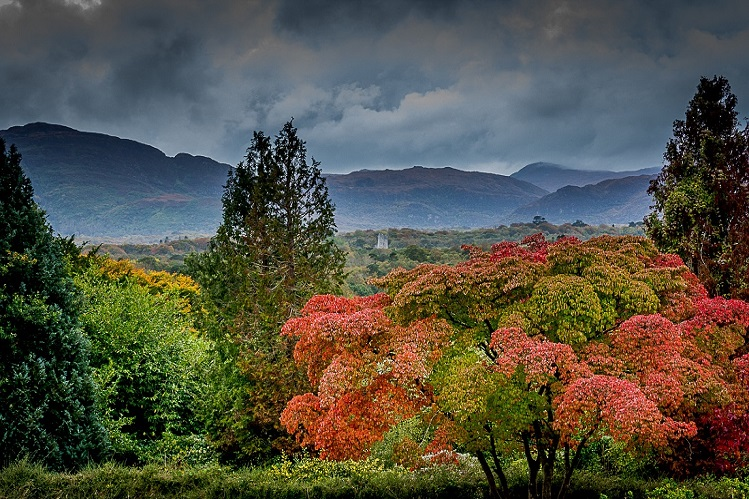 bosque y ross castle por brendan slattery en parque nacional de killarney