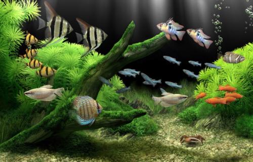 Manjakan Mata Dengan Dream Aquarium Screensaver
