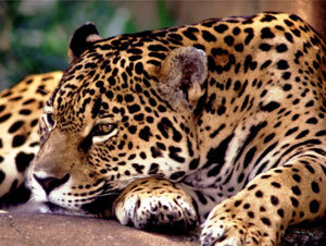 Pantanal Vacation Package - Caiman Lodge (3 Nights)