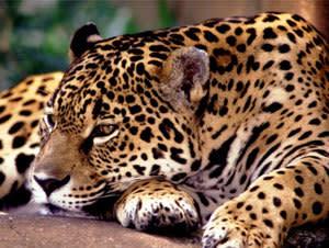 Pantanal Vacation Package - Caiman Lodge (3 Nights)