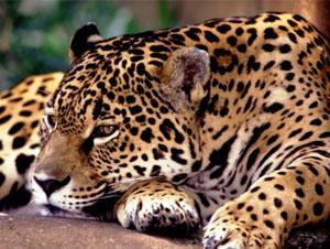 Brazil Travel Package - Pantanal and Bonito Wildlife (5N)