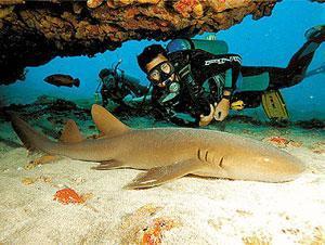 Brazil Vacation Package - Fernando de Noronha Island Outdoor and Adventure (5N)