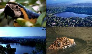 Bolivia Vacation Package - Amazon Rainforest and Wildlife (3N)