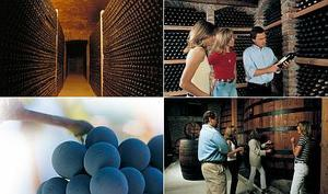 Chile Vacation Package - Wine and Vineyards (4N)