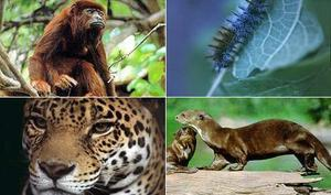 Custom Peru Travel Package and Tour - Manu National Park (4N)