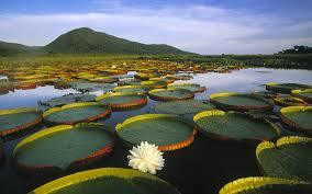 Pantanal Travel Vacation Packages