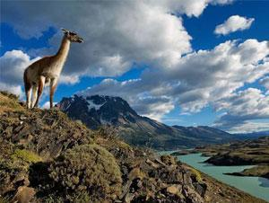 South America Wildlife Vacation Packages