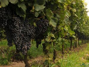 South America Wine and Food Vacation Packages