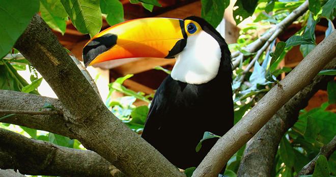 Exotic Bird - Pantanal - Brazil