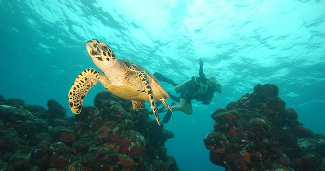 Scuba Diving - Fernando de Noronha - Brazil