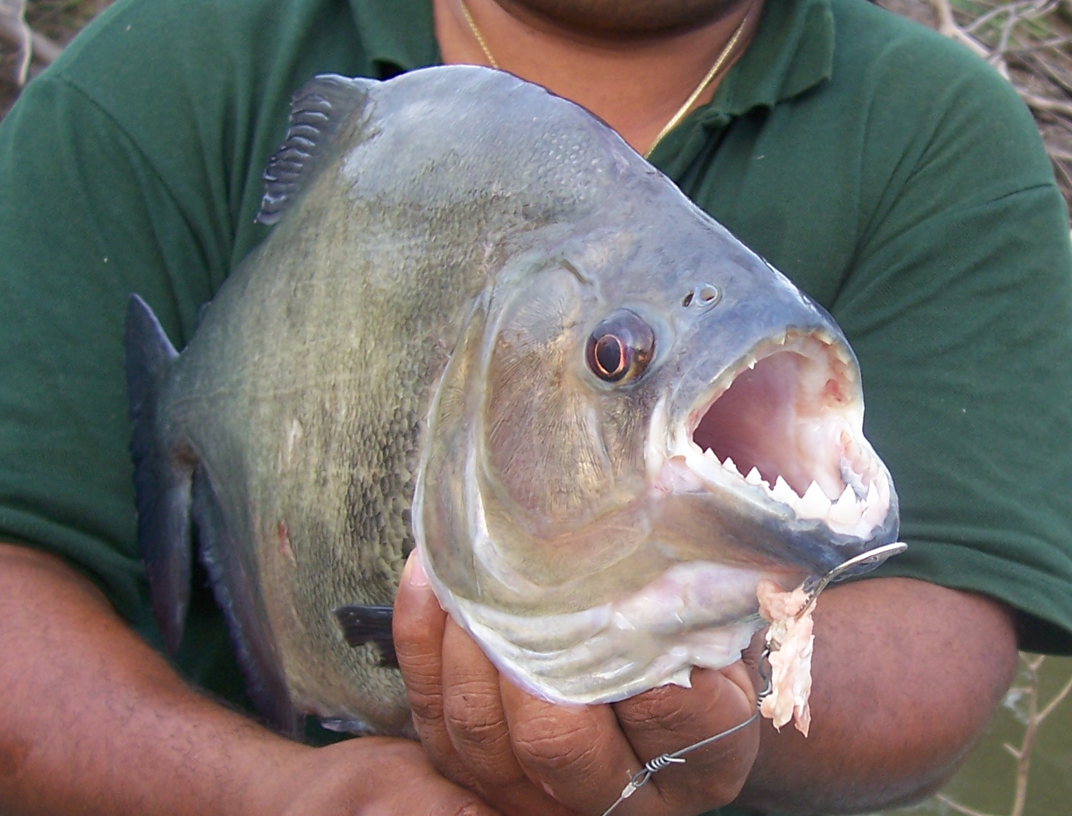 Anavilhanas Jungle Lodge Tours - Piranha Fishing