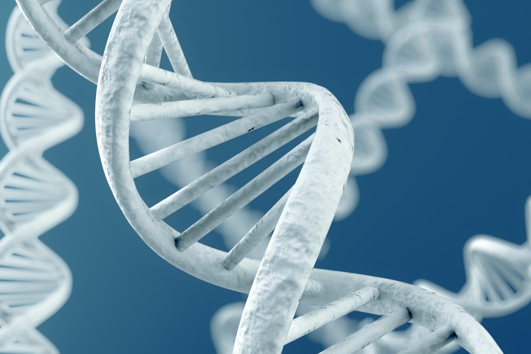 STEM Genetics