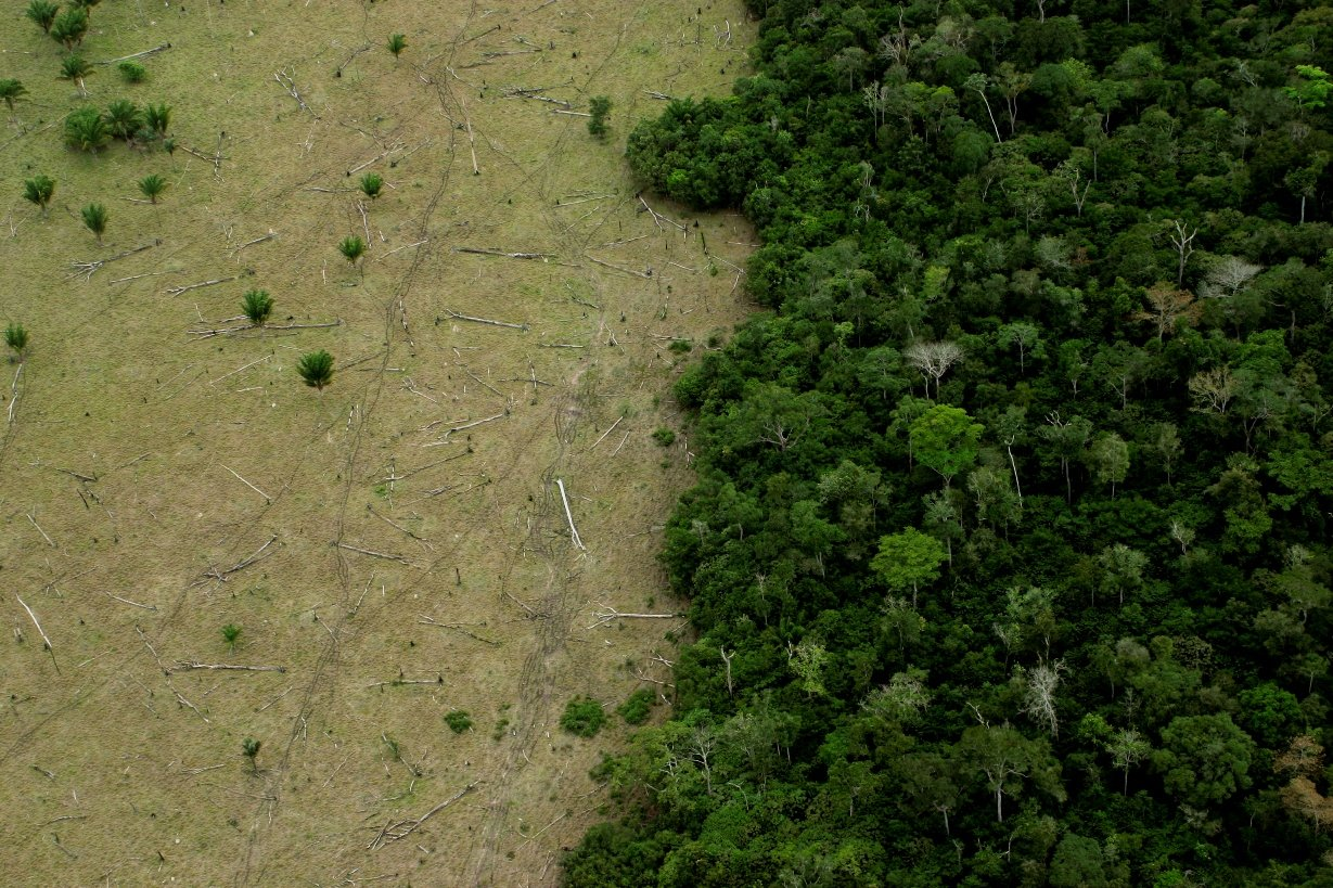 Brazil, deforestation and the Amazon rainforest | Virgin