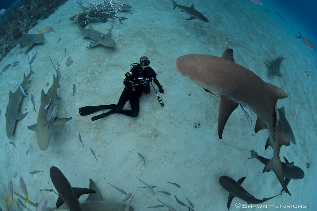 Richard tiger sharks