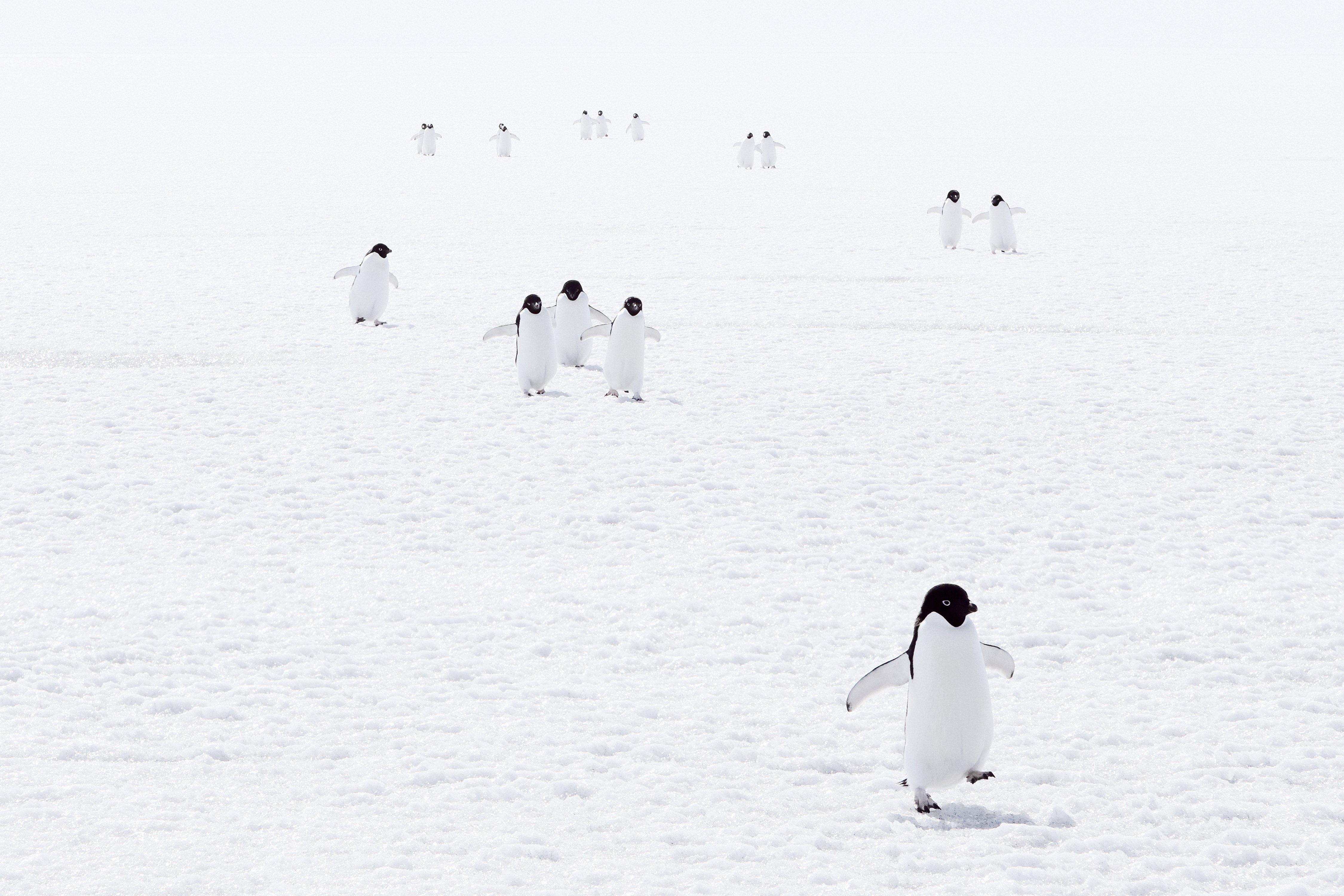 Watch the penguins perform_Credit John Weller