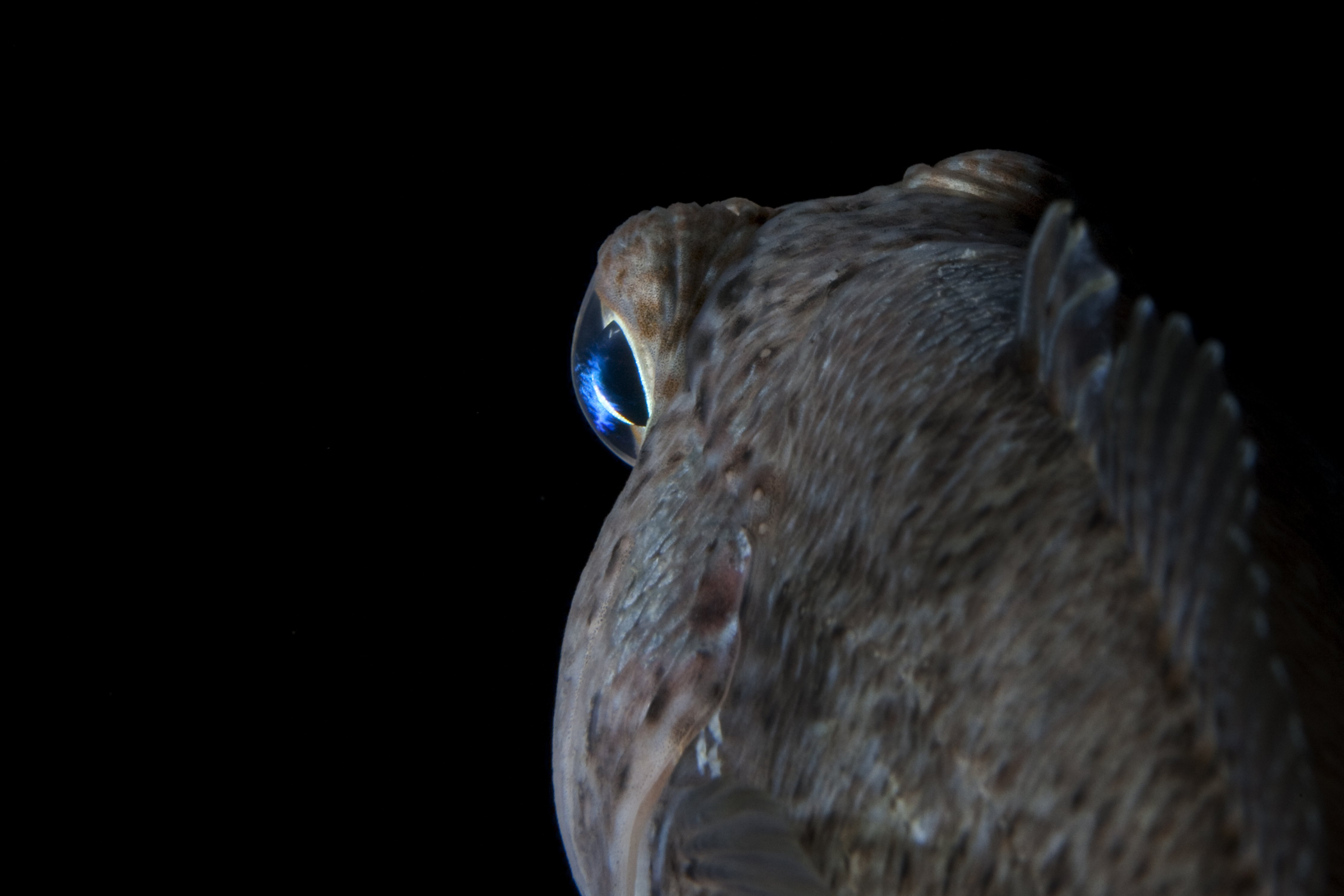 Remote fishery_Credit John Weller