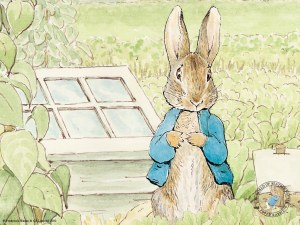 Peter Rabbit to head to the big screen