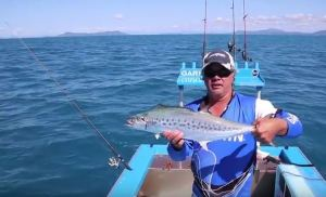VIDEO: Jigging for mackerel using metal lures