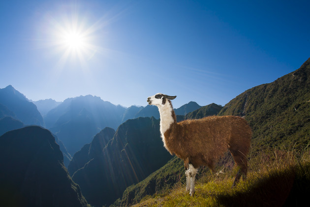 Shot with one of my favourite techniques, Program Mode with TTL auto flash. Point, shoot and take the image, it was that easy. I had my shots of Macchu Picchu and was looking for other photo opportunities. This simple style allowed me to concentrate on the moment and enjoy it as well. The Llama was only in this position for a few seconds. 17-40mm lens @ 17mm, 1/200s @ f13, ISO 100.
