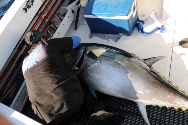 Fish in a barrel hookup site