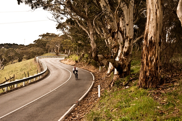 DSC_9017%20WILLUNGA%20HILL.jpg