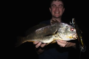 Mysterious yellow jewfish caught in upper Hunter River