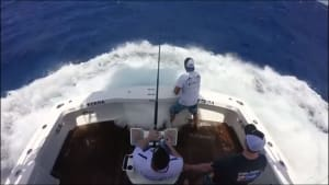 VIDEO: 800lb Cairns black marlin