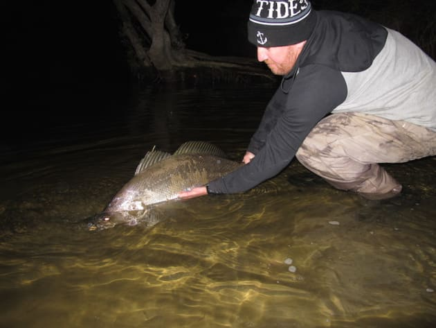 Over a metre of creek mouth jewie taken on a large tide with a hardbody lure.