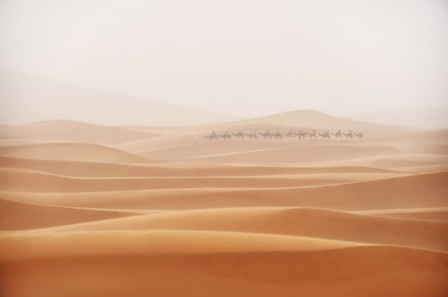 A camel train interrupts the never-ending lines of dunes during a sandstorm in the Moroccan Sahara. Nikon D90, 18-200mm lens. 1/125s @ f5.6, ISO 400.