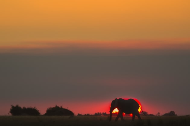 Waiting patiently until this bull elephant walked in front of the glowing ball of a setting sun before clicking the shutter paid off in this quintessential wildlife/landscape shot of an African dusk. Canon EOS 5D Mark III, 100mm to 400mm f4-5.6 zoom lens + 1.4x converter, 1/400s @ f8, -1EV, ISO 640.