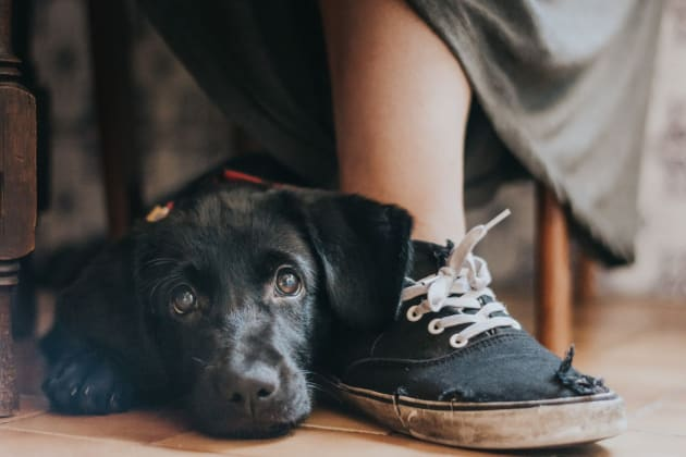 Rescue dog Yzma leans on her owner's foot (Maria Davison)