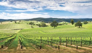 'Strong interest' for Winemaking Tasmania following VA