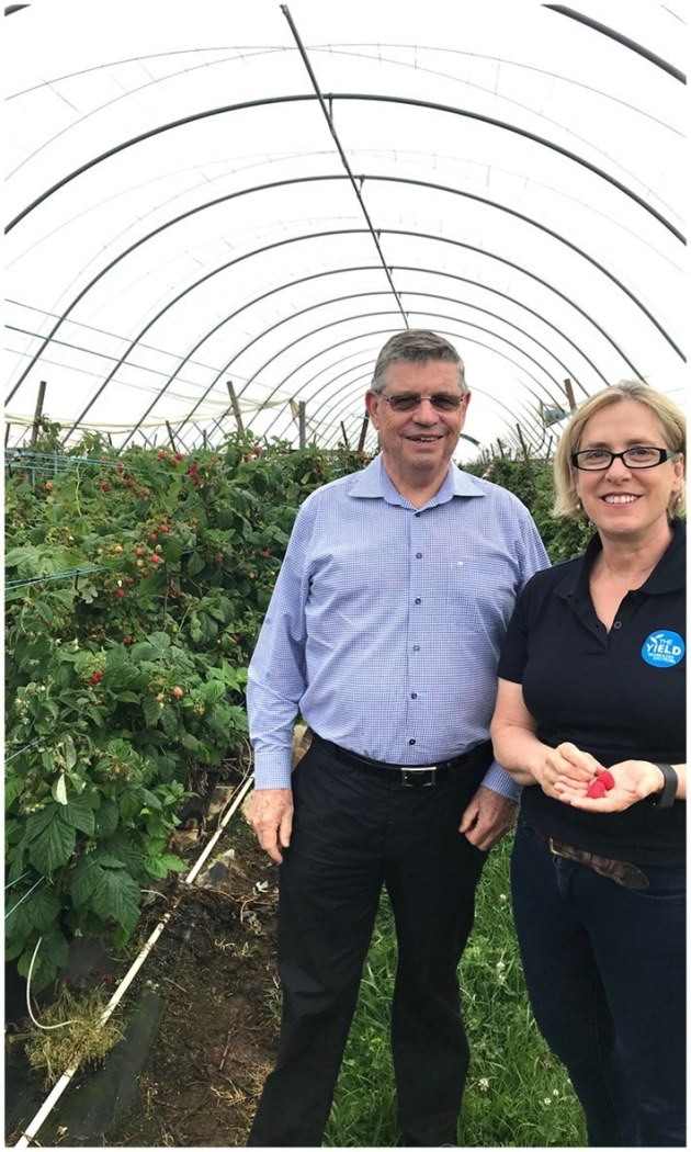 Harry Debney, Costa Group CEO, and Ros Harvey, The Yield founder and managing director, at a Costa berry farm in NSW.